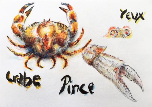 Apprendre dessiner le d tail sp cial crustac - Dessiner un crabe ...
